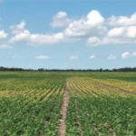 preventing Iron Deficiency Chlorosis in soybeans with Crop Nutrient