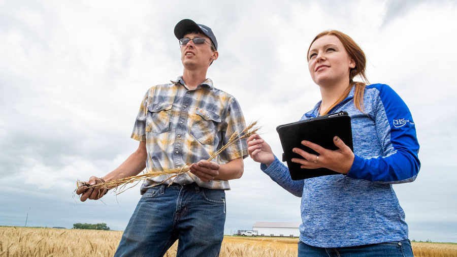A farmer and CHS employee holding a tablet standing together in a wheat field discussing cooperative ownership